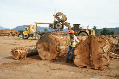 Почему наши деревянные дома — ваш лучший выбор?