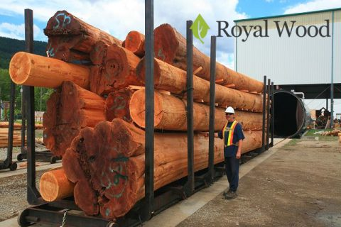 ВИДЕО! Сушка бревен красного канадского кедра диаметром 45 см и более